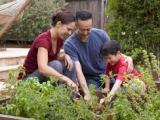 Family Fun: Gardening