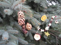 Christmastreeforbird