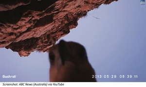 Eagle-selfie