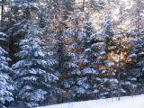 Family Fun: Snow!