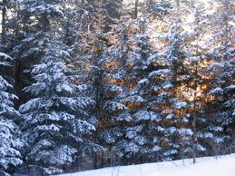 snowytrees