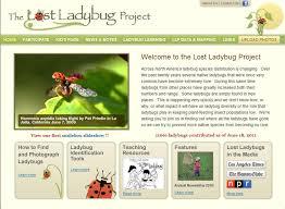 lostladybugproject