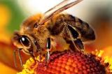 Save the Bees with Creative Problem Solving