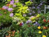 Planning a Garden,Creatively
